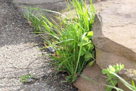 Unkraut siedelt sich gern dort an, wo es unerwünscht ist. Das Grün stört nicht nur die Optik, es erschwert auch die Reinigung von Flächen mit dem Kehrbesen bzw. Kehrbürsten. Kommunen dürfen zur Beseitigung dabei aber nicht mehr zur chemischen Keule greifen.